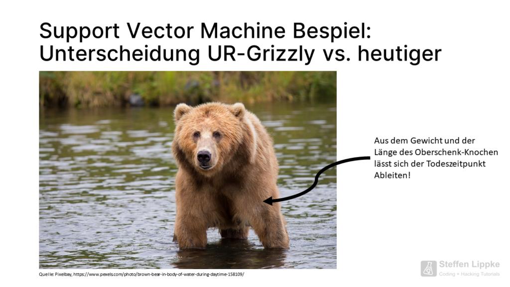 01 Beispiel mit dem Bär - Was ist eine Support Vector Machine Tutorial Steffen Lippke Coding Lab